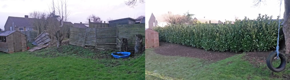 Fence blown down replaced by instant hedge
