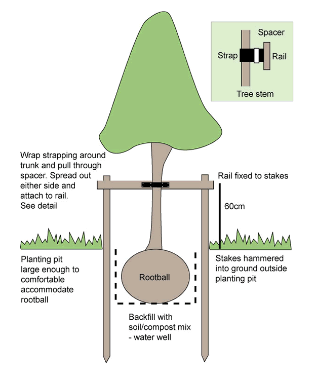 diagram_of_double_staking_tree