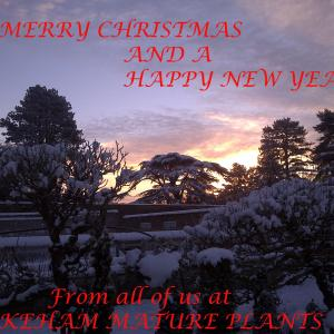 Merry Christmas from Wykeham Mature Plants