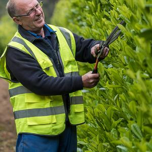 picture of man trimming hedge