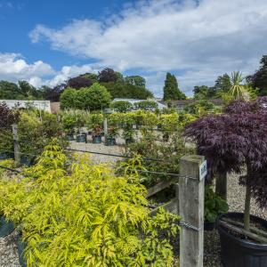 picture_of_wykeham_mature_plants_walled_garden