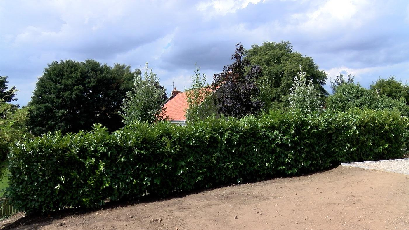 Much improved view after instant hedging is planted