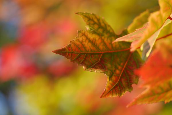picture_of_autumn_leaves