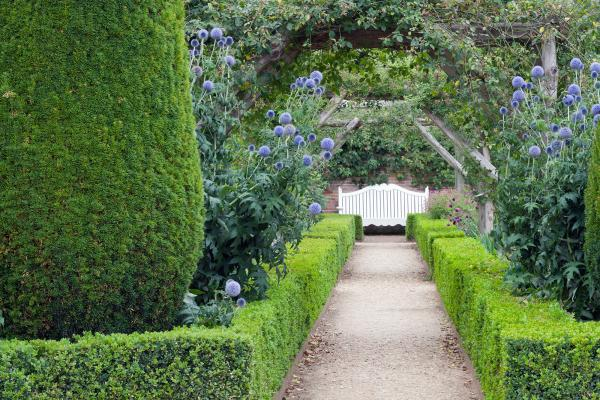 picture_of_mature_garden_with_hedging