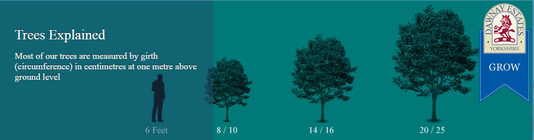 diagram of tree sizes